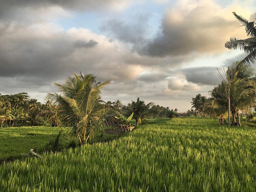 Bali_8-UbudRiceTerraces (21)