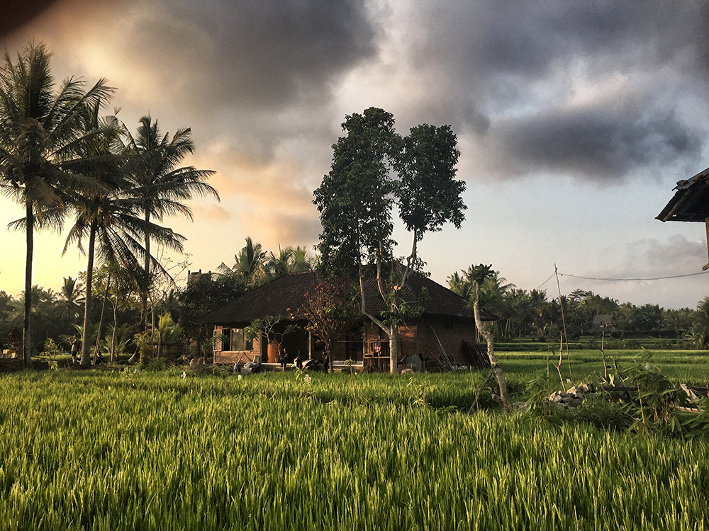Bali_8-UbudRiceTerraces (23)