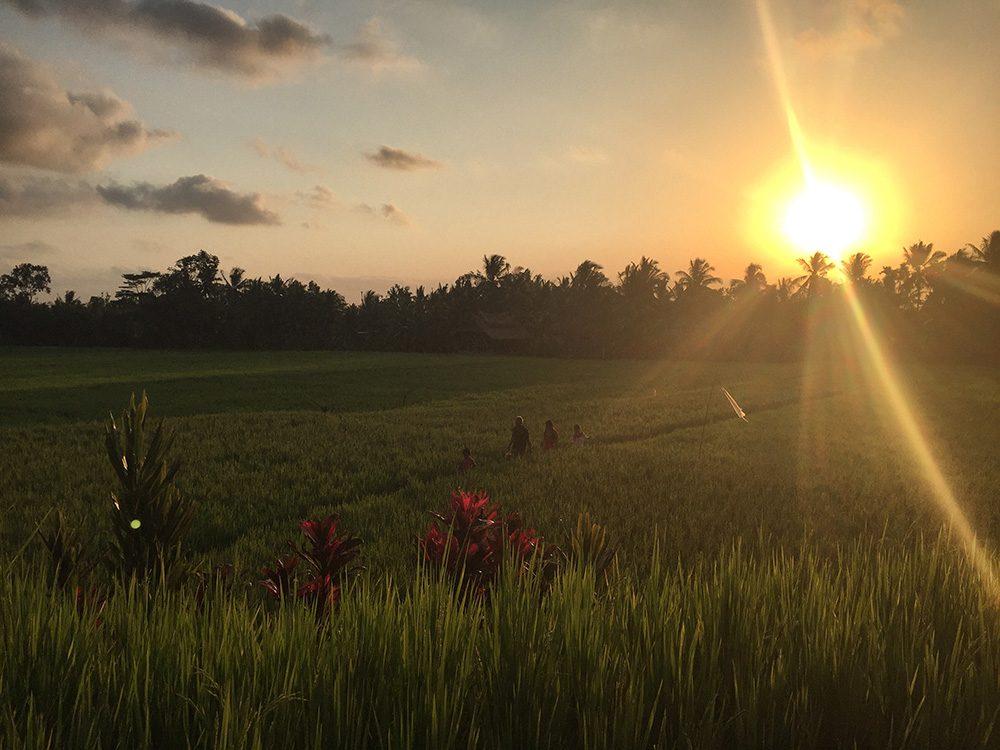 Bali_8-UbudRiceTerraces (24)