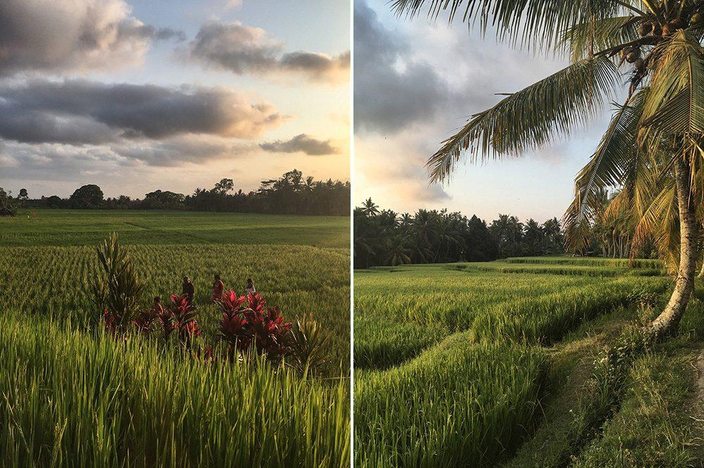 Bali_8-UbudRiceTerraces (25)