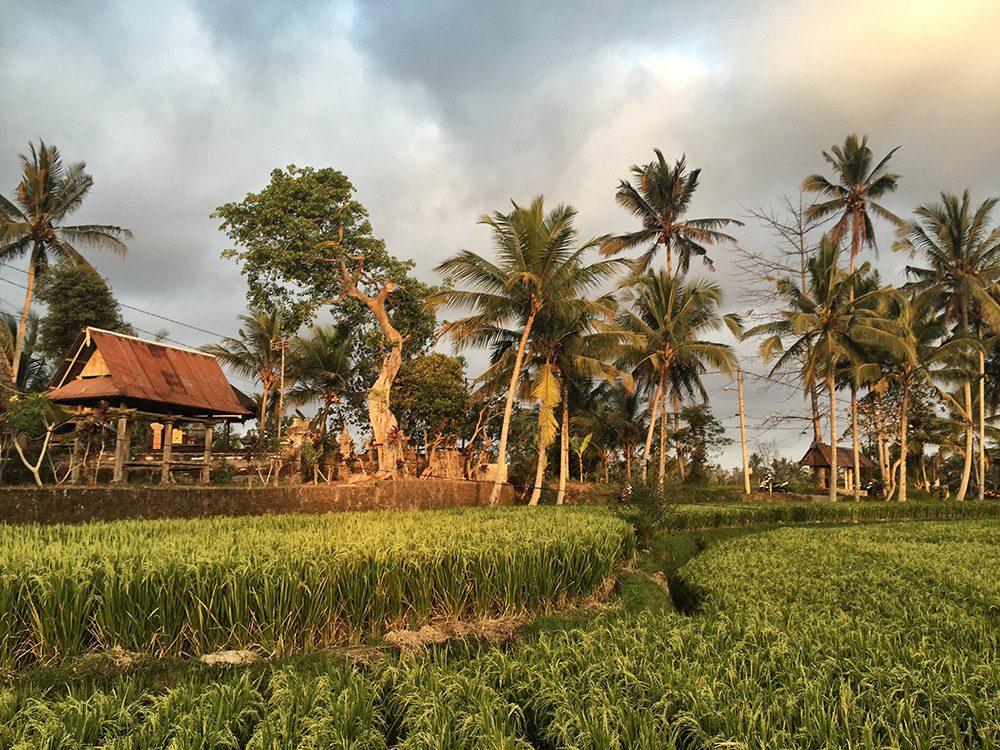Bali_8-UbudRiceTerraces (28)