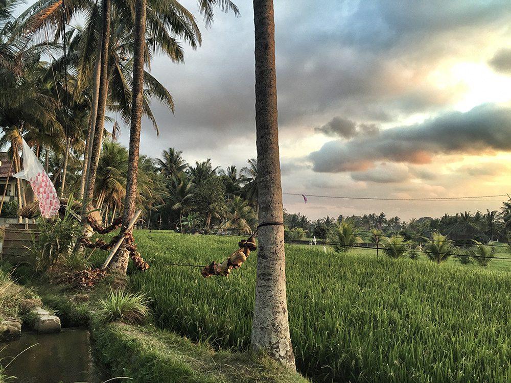 Bali_8-UbudRiceTerraces (29)