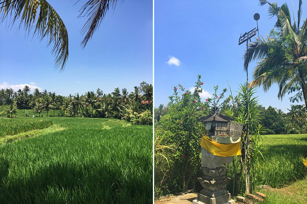 Bali_8-UbudRiceTerraces (3)