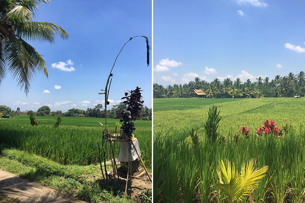 Bali_8-UbudRiceTerraces (4)