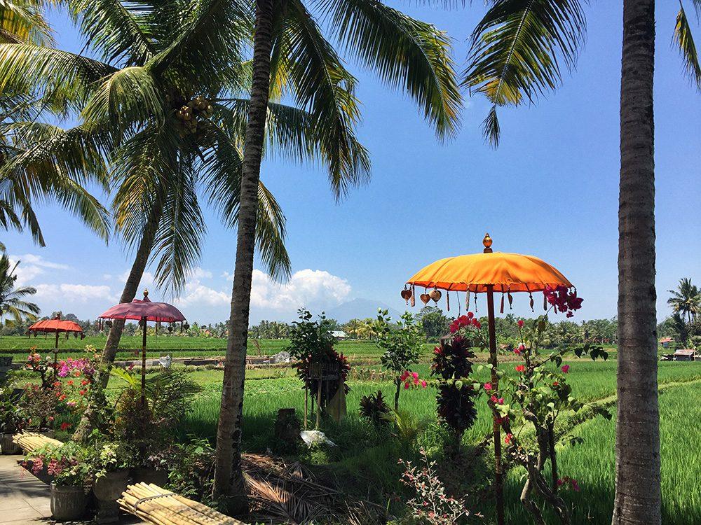 Bali_8-UbudRiceTerraces (5)