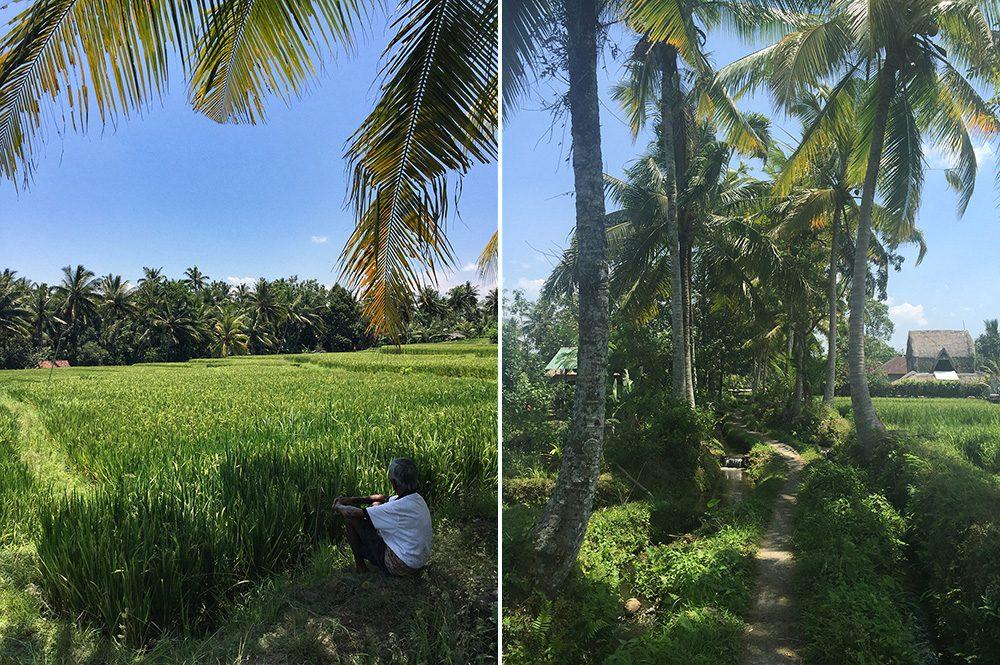 Bali_8-UbudRiceTerraces (6)