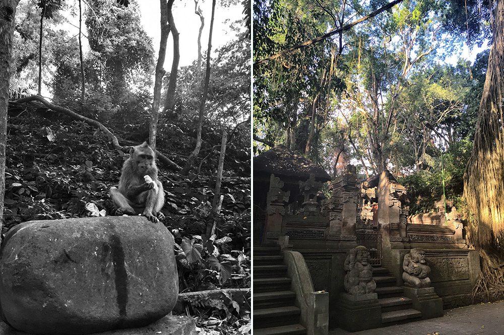 Bali_9-MonkeyForest(1)