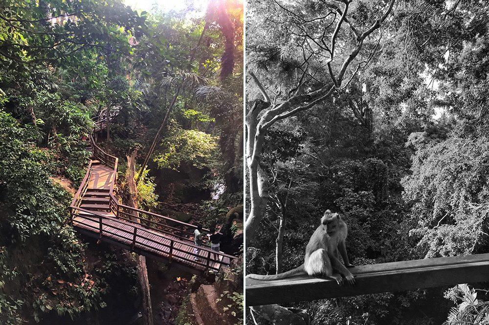 Bali_9-MonkeyForest(2)