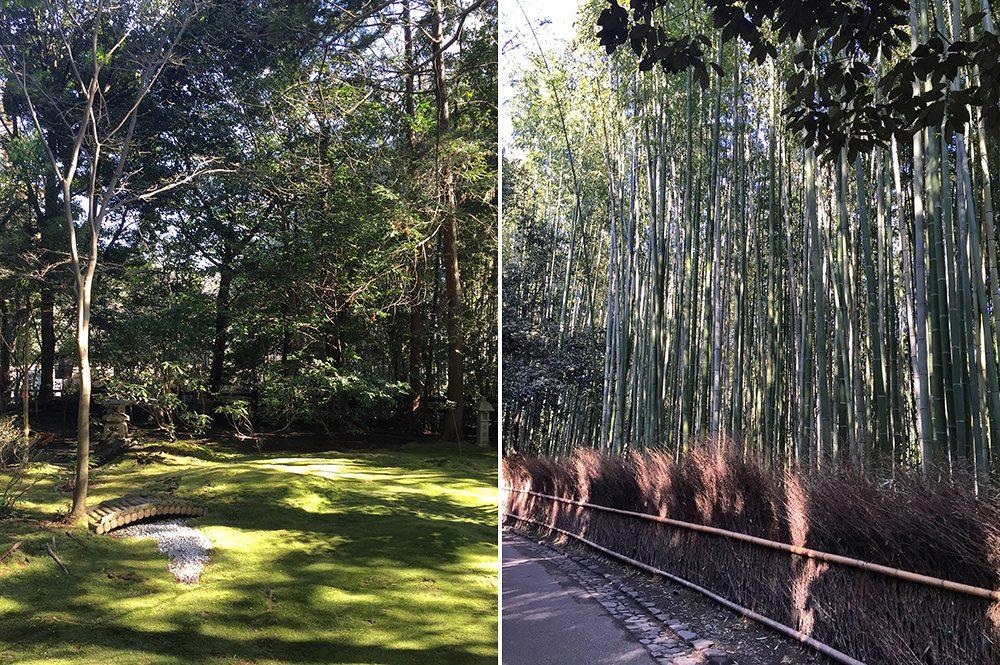 B bamboo (4)