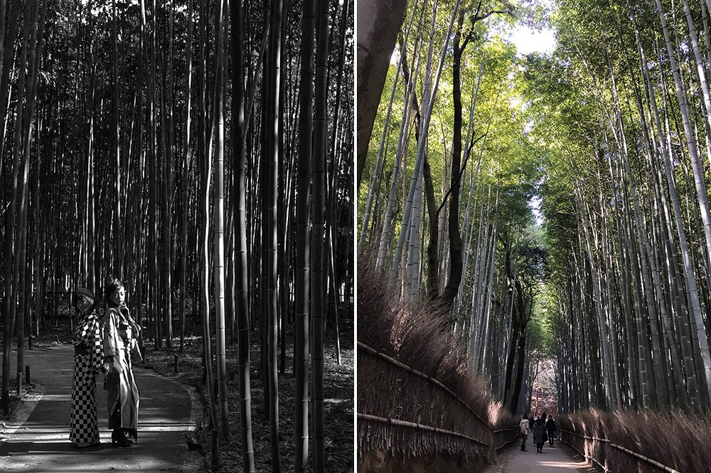B bamboo (6)