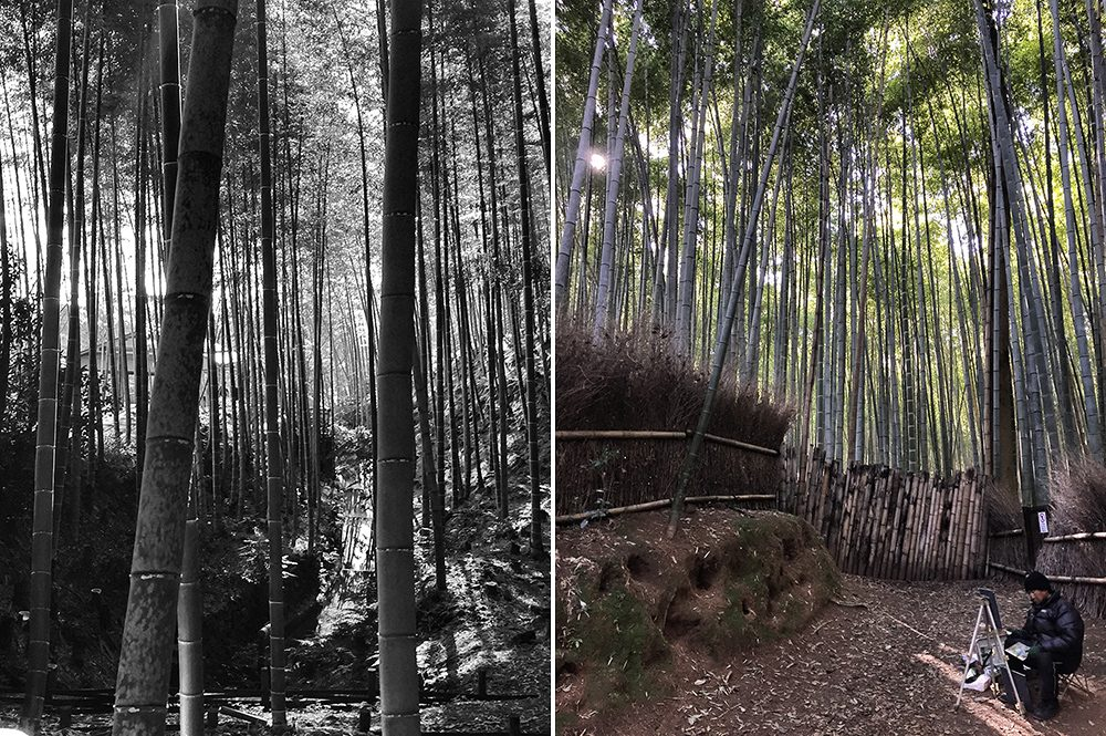 B bamboo (7)
