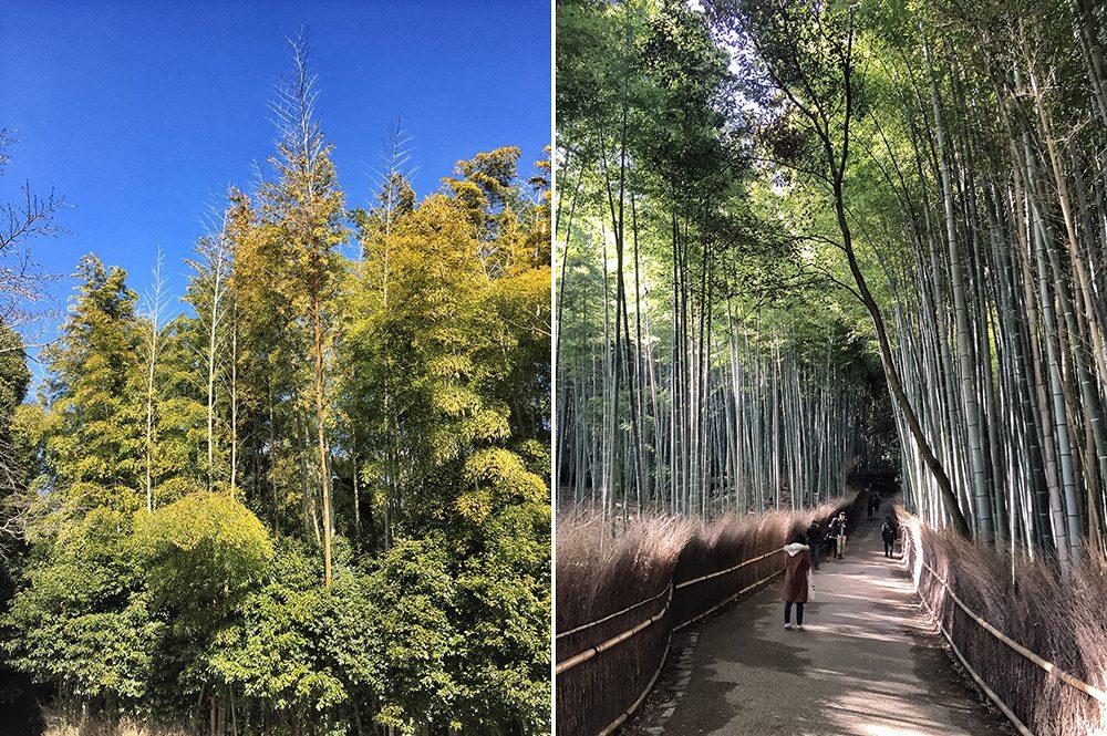 B bamboo (8)